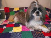 CKC MALE SHIH TZU 3 YEARS OLD. GETS ALONE WITH OTHER