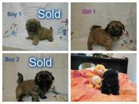 2--Girl ---$400.00 each have first shot & wormed every