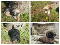 2--Boys --$350.00 each 2--Girl ---$400.00 each have