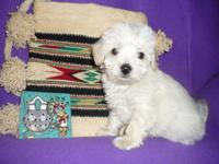 SNOWBALL is a ckc developer puppy whose dam is a 2nd