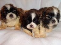 SEVERAL COLORS BK/WH PARTY CHO/WH AVAILABLE VACCINATION