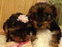 Price Reduced!!! Born Aug 24. Tails docked, dew claws