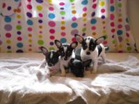 I have 4 small chihuahua puppies for sale. They were
