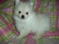 We have 2 very sweet little t-cup female Pomeranian
