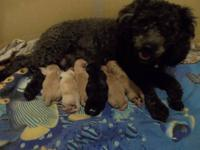 We have 9 new babies ! 6 minature and 3 toys born