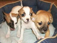 Three very cute puppies one Female & two Males. The