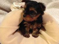 I have a male and a female Yorkie that will be