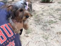 5 month old Yorkie female weights 2.8 pounds. She is