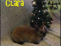 CLARA This sweet dwarf mix is 5 months old, and looking