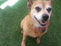 Hey, I'm Clara! I'ma mellow older lady who is looking
