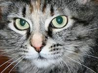 Clara's story I am a beautiful kitty who needs a loving