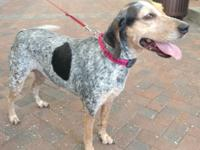 Clarabelle is a 6 year old blue tick hound. The things