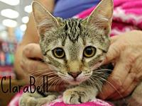 Clarabell's story The adoption fee is $85.00 with an