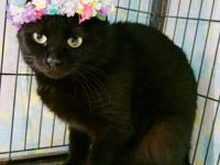Clarice is a sweet girl, about 1-1/2 years old.  She