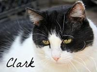 Clark's story Born 2006 - Clark is a big boy with a