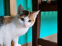 Clary's story Clary came to us as a stray kitten with a