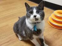 Claude's story Looking for a cuddle buddy and play