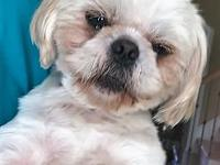 Clay's story My name is Clay and I am a 15 lb. Shih Tzu