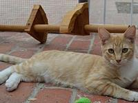 CLAYTON's story Check out this creamsicle color