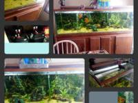 tall-2ft wide-2ft long-5ft 1in comes with two fluval