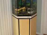 I have a very well cared for 37 gallon fish tank and