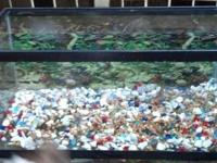 Selling my 50-gallon fish tank.I bought it for my