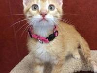 Clementine's story I'm a sweet little orange tabby