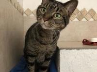 Cleo's story Cleo is an alert tabby who can be vocal at
