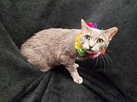 CLEO's story Hi  Cleo here and I am looking for my new