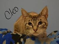Cleo's story Cleo is shy yet lovable she is in search