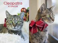 CLEOPATRA's story Beautiful Cleo came to the shelter