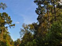 Large raw timberland tract in the path of progress,