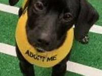 My story I am possibly a Black Lab/Boxer mix male. I am