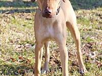 Cliff's story Cliff #2190 is an 8-month-old male,