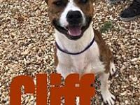 My story Cliff is a 1-2 yr old American Straffordshire