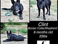 Clint's story This stunning boy is Clint! He is a 6