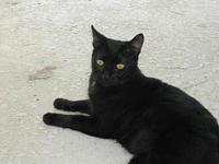 Clive's story Clive is a handsome black male cat with