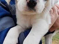 Clive's story Born Jan 7th, Clive came to us with his