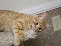Cloud's story Cloud is a playful orange Tabby with the