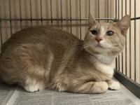 Cloudy is a people and animal friendly kitty looking