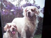 Want to learn more about the Clumber Spaniel? Before