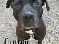 My story Clutch was a bait dog in Texas that was dumped