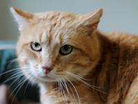 Clyde is a very quiet and sweet male feline who likes