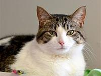 Clyde's story Clyde is a large and very handsome cat,