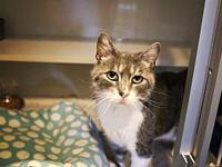 Clyde's story Clyde is a sweet blue tabby looking for a