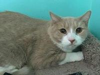 Clyde's story Clyde Age: 3 years old DSH/Neutered Male