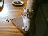 Clyde Frasier's story Keller's Kats Rescue Inc. is a