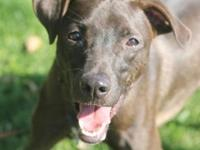 Clyde's story Hi everyone! I'm Clyde and I'm ready to