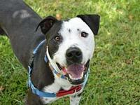 Clyde's story Clyde Rigsby here! Im a sweet, energetic,
