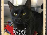 When Coal came to us he was very ill. He had a severe